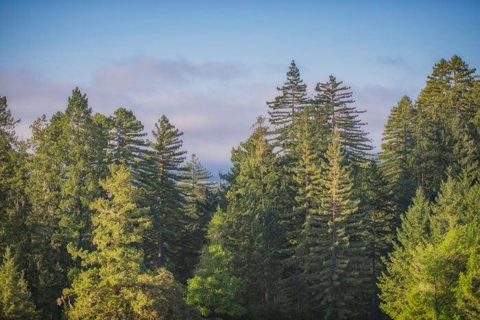 Sky over Harold Richardson Redwood Reserve