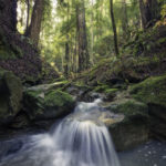Pristine unnamed creeks run through Harold Richardson Redwoods Reserve.
