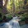 Pristine unnamed creeks run through Harold Richardson Redwoods Reserve.