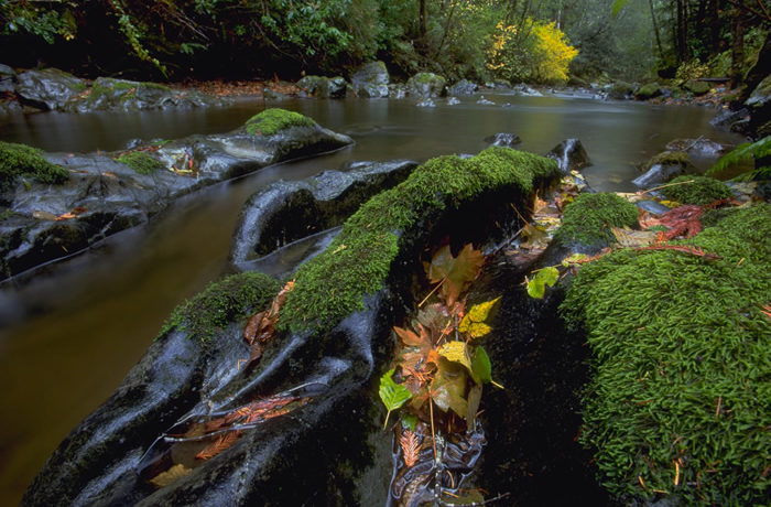 Restoration of Mill Creek provides a healthy habitat for imperiled salmon.