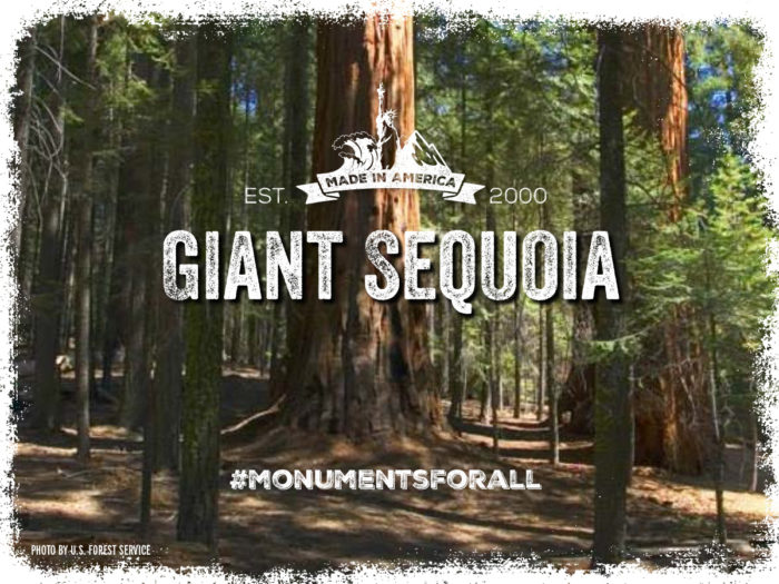 Giant Sequoia National Monument. #MonumentsForAll