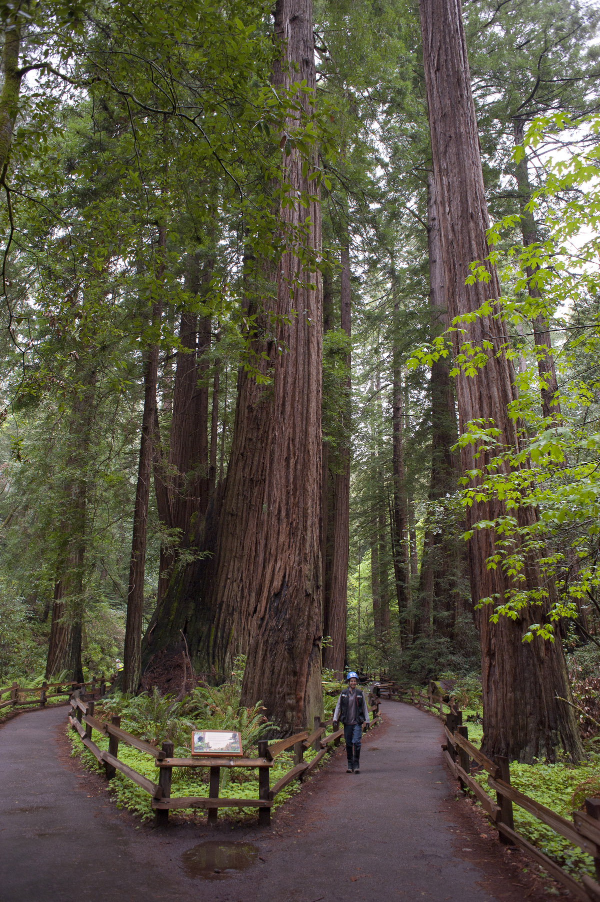 Cathedral Grove at Muir Woods National Monument. Photo credit: Tonatiuh Trejo-Cantwell