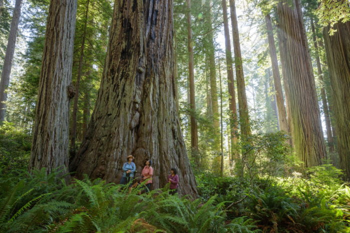 Three people hiking in the redwoods