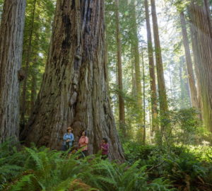 : LWCF helped make it possible for Save the Redwoods League to protect part of the Prairie Creek corridor and add the land to Redwood National Park, a UNESCO World Heritage site. Photo by Max Forster