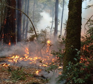 Prescribed burns help lower the risk of catastrophic fires.