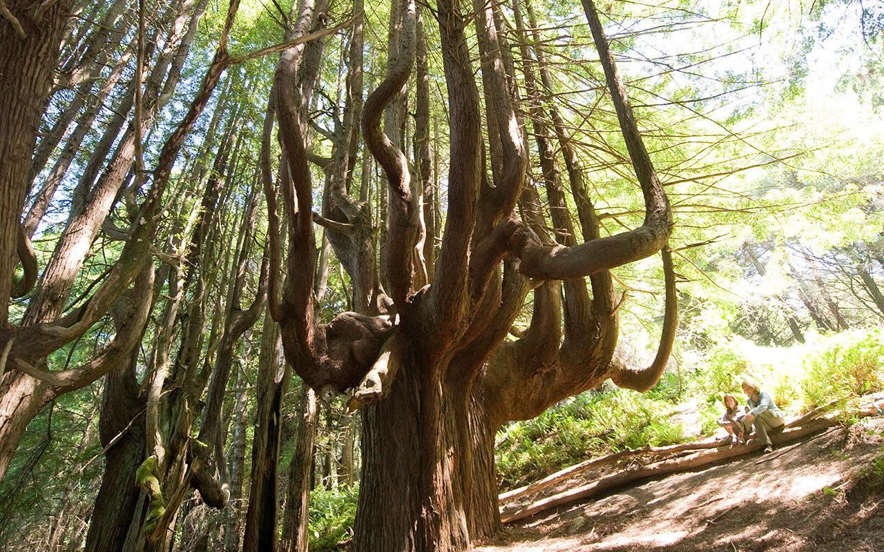 Shady Dell's stunning candelabra trees. Photo by Paolo Vescia