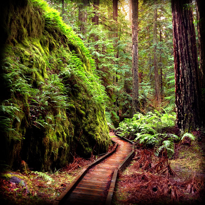 Michael Gauthier's shot from Montgomery Woods State Park, honorable mention in the 2013 Know Wonder Photo Contest.