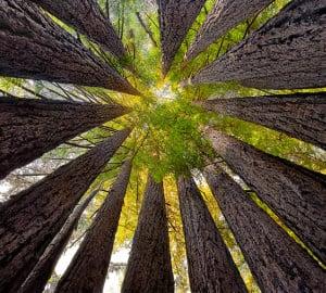 Sean O'Gara's 'Redwood Cathedral'