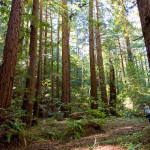 You can protect and open Loma Mar Redwoods to the public. Photo by Paolo Vescia