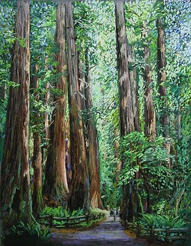 'Muir Woods' by Manabu Morikawa
