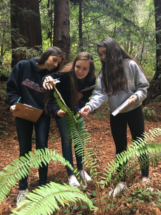 Studying a Western swordfern as an indicator of how drought impacts the forest.