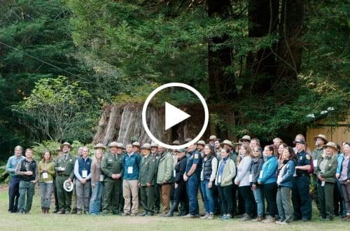 Redwoods Rising