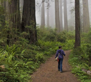 Land protection movement could have big implications for redwoods