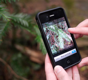 Redwood Watch app. Photo by Save the Redwoods League