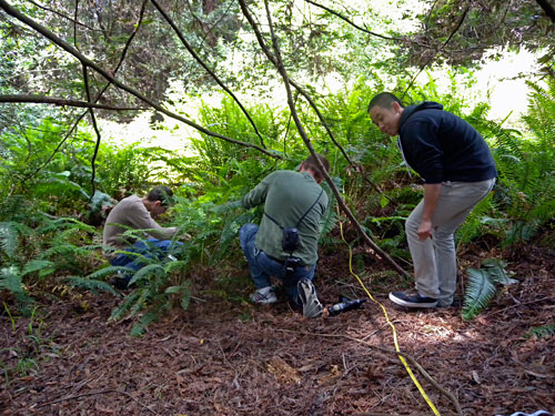 Volunteers study this dense plot of sword fern.