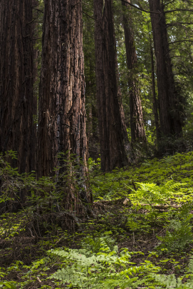 Free Second Saturday: Special Birthday Edition 2018. Redwood Regional Park. Photo by Paolo Vescia.