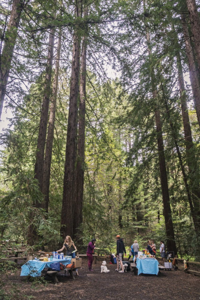 Free Second Saturday: Special Birthday Edition 2018. Redwood Regional Park. Photo by Gary Crabbe. Courtesy of East Bay Regional Park District.