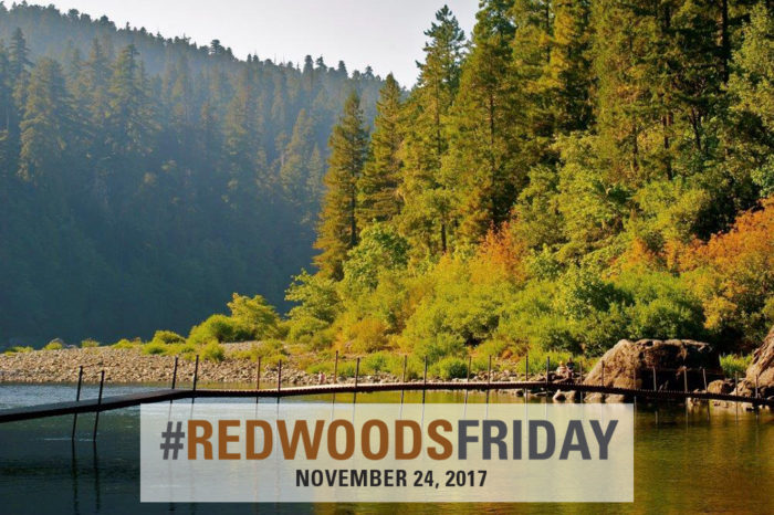 Jedediah Smith Redwoods State Park still has passes available. Get yours today! Photo by Jon Parmentier