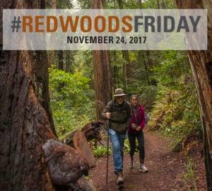 Redwoods Friday 2017, Nov. 24. Photo by Paolo Vescia
