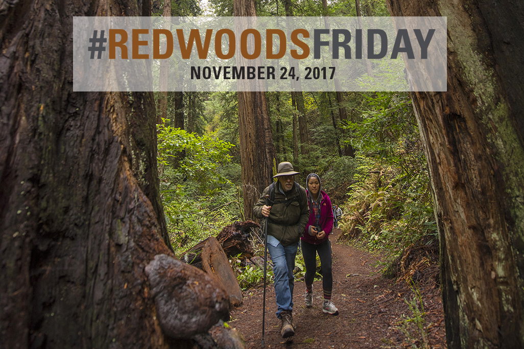 Redwoods Friday 2017, Nov. 24. Photo by Paolo Vescia