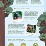 Infographic describes the benefits that redwoods provide for people and wildlife.