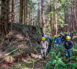 A long line of people wearing yellow, white, and blue construction hats walk through ferns past a large redwood tree stump. Photo by Max Forster