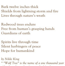 Reverence for Redwoods by Nikki King