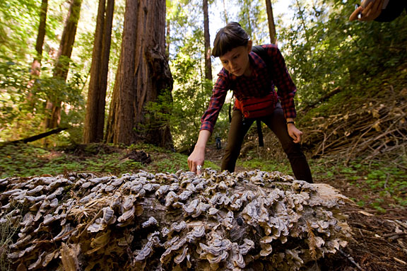 Fungi catch the eye of a hiker in Peters Creek Old-Growth Forest. Photo by Paolo Vescia