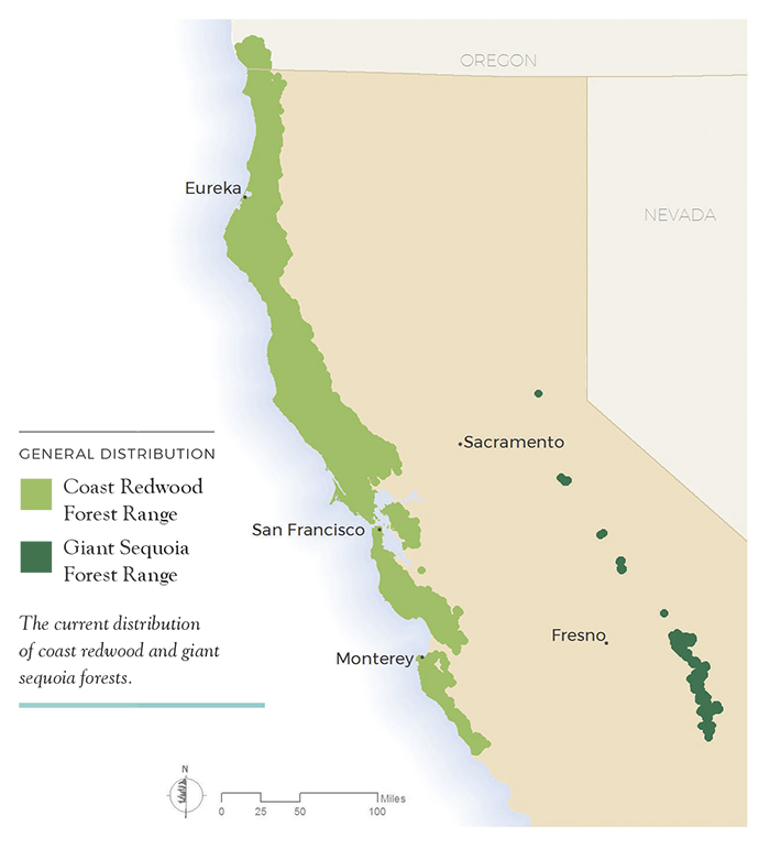 The current distribution of coast redwood and giant sequoia forests.