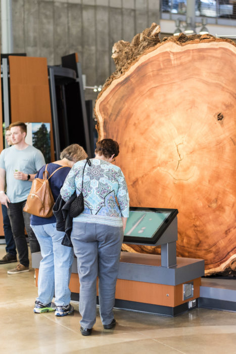 Cross section of a redwood at the California Academy of Sciences' Giants of Land and Sea exhibit. Photo by Alisha Laborica
