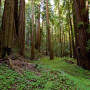 Santa Cruz Mountains Old-Growth Campaign. Photo by Paolo Vescia