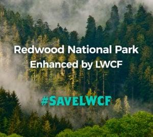 Redwood National Park ehanced by LWCF. #SaveLWCF