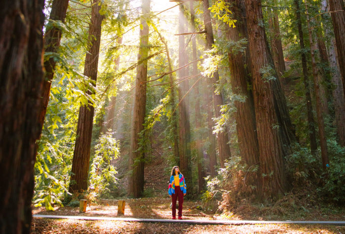 A woman stands on a paved trail, looking up at the surrounding redwood trees, with the sun's rays shining down.