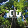 Stand for the Redwoods – 100 Years – 1200px