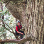 Stephen Sillett ventures into the redwood canopy
