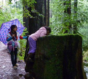 Children from Canal Child Care Center explore redwoods in Marin County, thanks to a grant from Save the Redwoods League. On trips to a number of forests, participants used nets, binoculars, cameras, magnifying glasses and field guides to assist in examining their discoveries. Photo by Canal Care Center