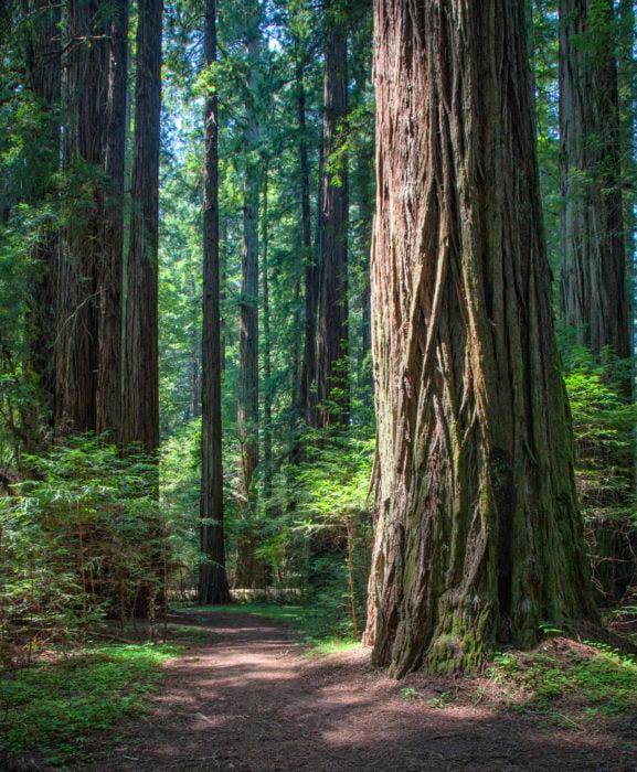 Humboldt Redwoods State Park.