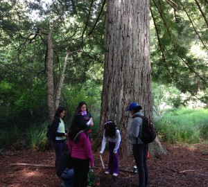 Students conduct scientific investigations of redwood trees as well as explore the forest in Little Basin.