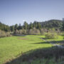 Westfall Ranch is protected from commercial logging and development. Photo by Mike Shoys.