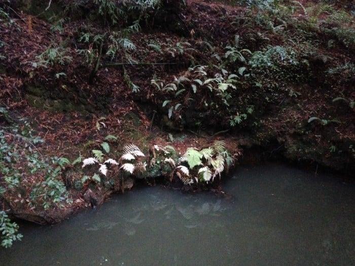 Winter White Fern