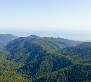 Photo of Big Basin area © 2011 William K Matthias
