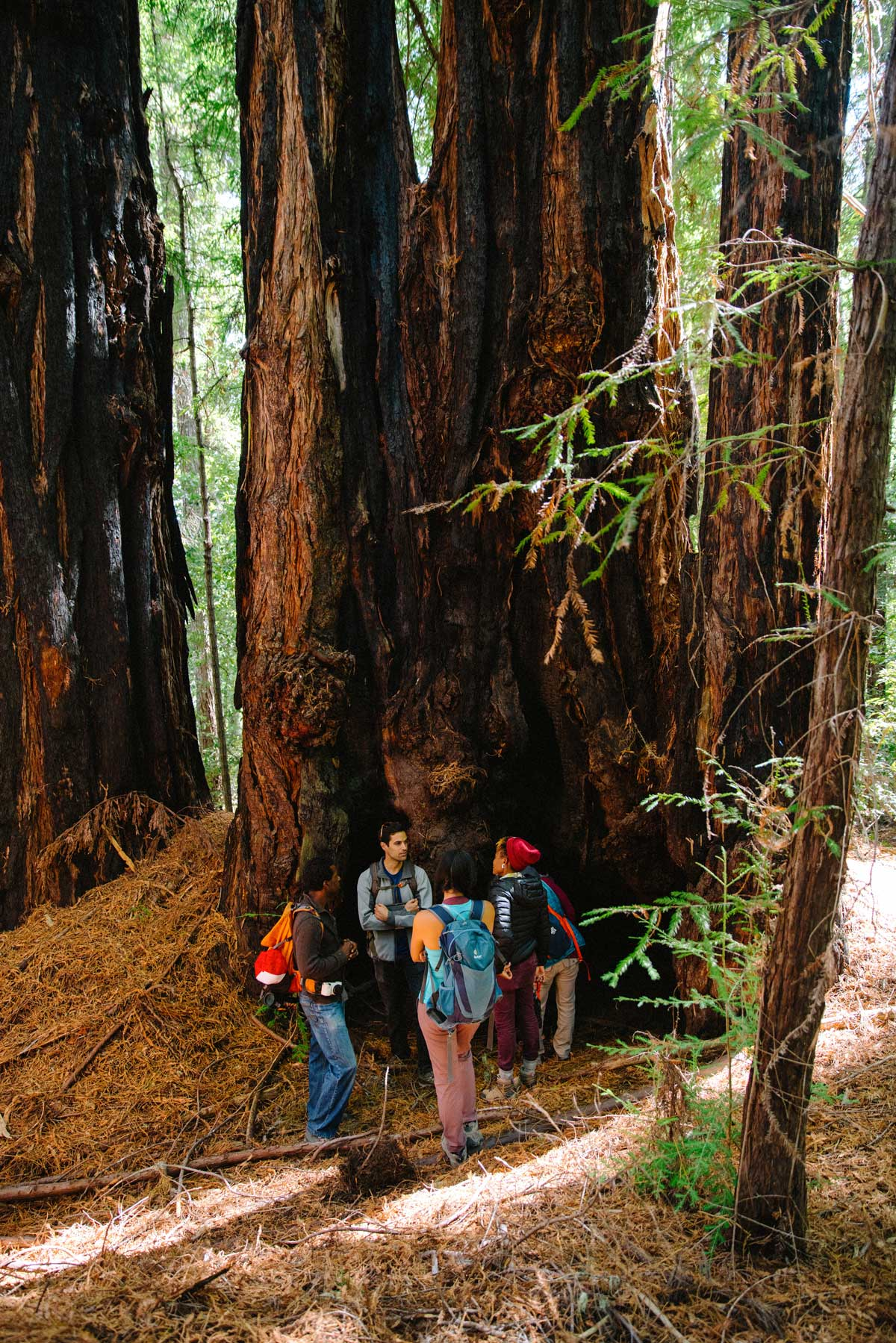 A diverse group of young adults, all people of color, gather at the base of a redwood.