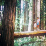 League Conservation Programs Associate, Adrianna Andreucci​, visits Humboldt Redwoods State Park as a child.