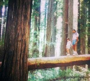 League Conservation Programs Associate, Adrianna Andreucci, visits Humboldt Redwoods State Park as a child.