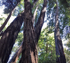 Forest of Nisene Marks State Park.