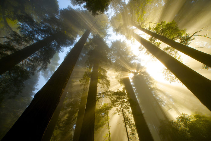 Del Norte Coast Redwoods State Park. Photo by Jon Parmentier