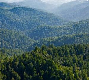 Aerial view of CEMEX Redwoods. Photo by William K. Matthias
