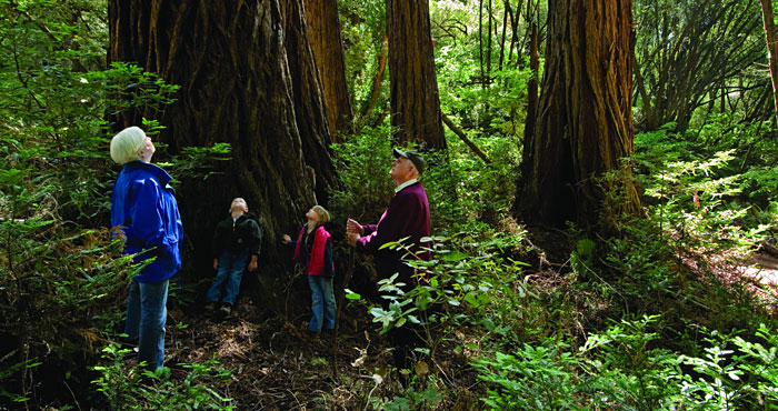 No matter what your age, spending time among the redwoods can be a rewarding experience. Photo by Paolo Vescia