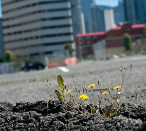 Nature persists in the paved expanses of the urban jungle. Photo by Luke McGuff, flickr creative commons.