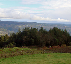 Vineyard conversion has become an increasingly significant threat to redwood forests in recent years.